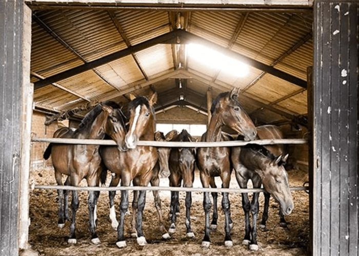 manege equestre